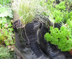 James Hyde Gardening - Old Boots with Carex - Click to enlarge