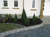 James Hyde Gardening - Hedge Cutting (After) - Click to enlarge